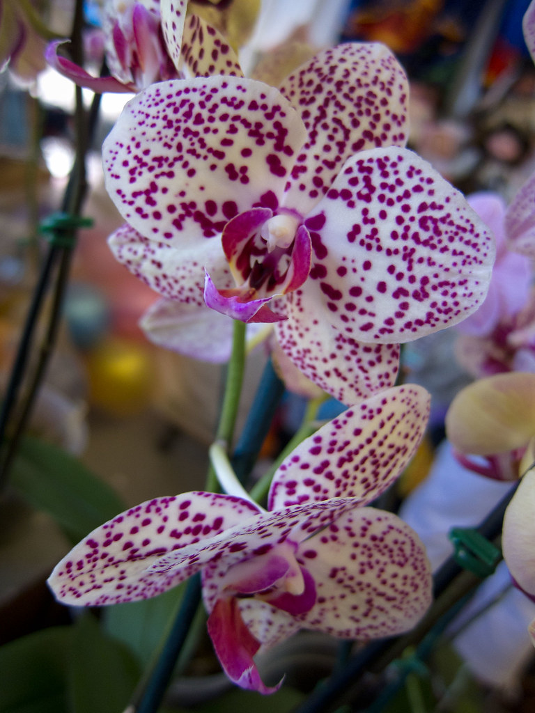 92-365 Orchids