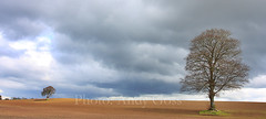 Those Trees [panoramic]  - Ireland (Andy_Goss) Tags: ireland plough lonetree carlow ploughedfield vanagram gettyimagesirelandq1