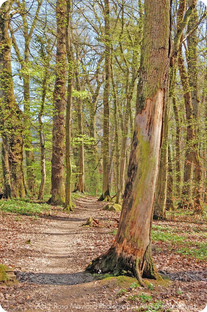 Springtime Forrest Ecole Veyrier 1.1 bis