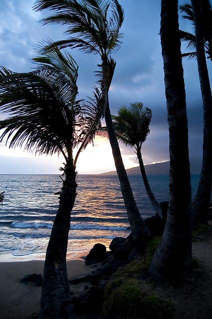 palmsinset
