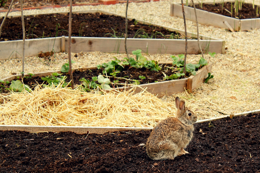 mama rabbit