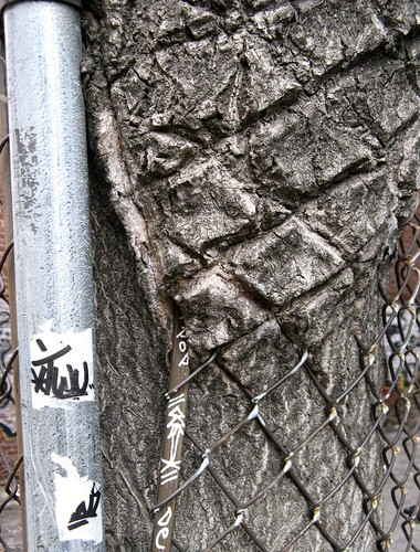Close-Up Of Fence's Ripples in a Tree