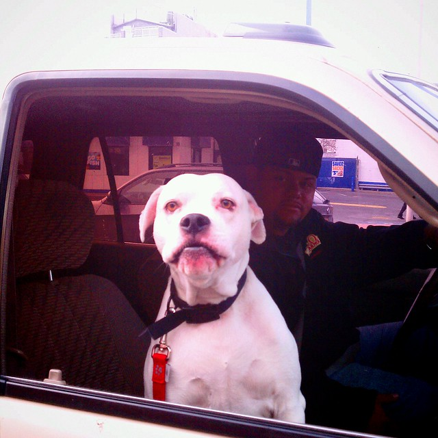 Dog in the window with driver