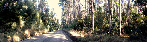 Panorama Dirt Road.
