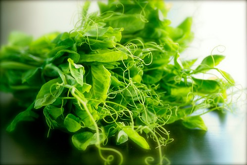 fresh pea shoots