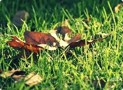 on a Green Way (lizbeth ) Tags: light macro green primavera luz grass leaves closeup yard hojas photography spring dof zoom outdoor pov may lifestyle depthoffield metamorphosis feuilles greenway thismorning closetoyou lowangles arasdesuelo lowpointofview lastautumnleaves llmaloinspiracin