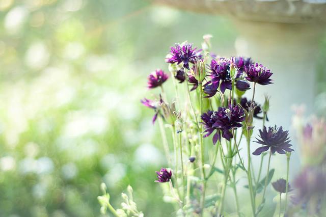 FlowerGarden2011-10