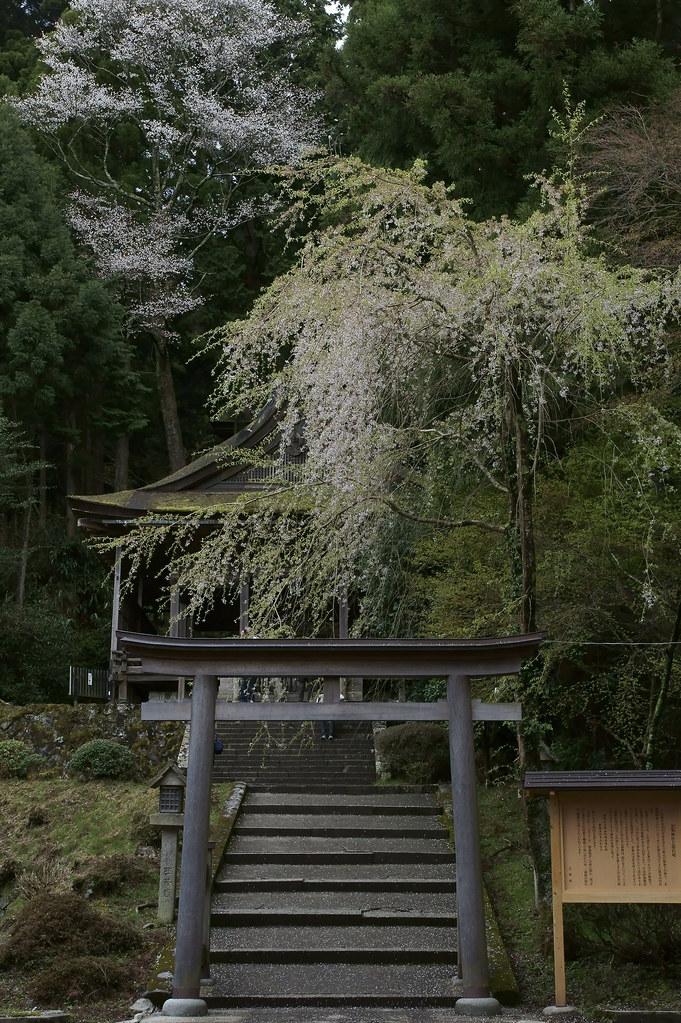 Yoshino 2