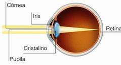 Córnea, retina, pupila, iris y cristalino