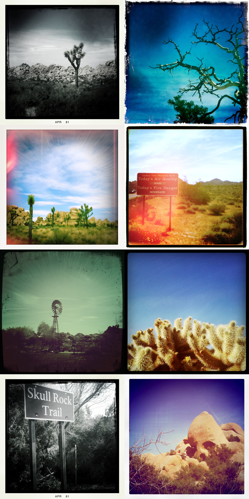 Joshuatree_iphone_blog3