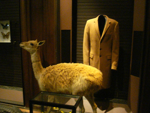 Vicuna fleece vicugna vigogne guanaco camelid woven wool jacket natural history museum paris