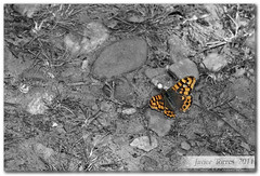 Un descanso a mitad del vuelo (The Whisperer of the Shadows) Tags: light orange color colour luz butterfly insect geotagged 100mm rest interferencia mariposa naranja explanation descanso insecto explicacin escamas