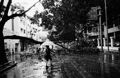 road block (king jai) Tags: china road bw tree film falling era shenzhen block 100 datestamp selfdeveloped naturaclassica