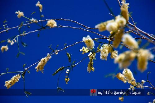 Spring-in-Sonora-desert-12