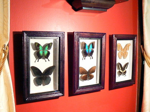 Butterflies on wall