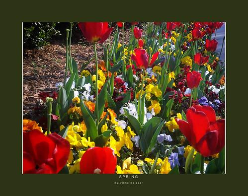 Spring by Vilma Salazar