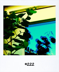 "#Dailypolaroid #222 #fb • <a style=""font-size:0.8em;"" href=""http://www.flickr.com/photos/47939785@N05/5676593087/"" target=""_blank"">View on Flickr</a>"