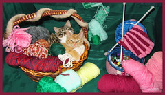 Cute Kitty Cat Kittens 'Knitting' in a Basket of Wool & Yarn in a Crafts' Home Garden Art Decor. Cute Kitty Cat Kitten 'Cross-stitching'...Kitty Cat Kitten...Cute Kitty Cat Kitten...Kitty Cat Kitten... (Chantal PhotoPix) Tags: family decorations friends light wallpaper portrait pet cats pets holiday canada color cute art wool nature beautiful beauty animal animals cat photoshop canon painting fun photography photo interestingness amazing knitting kitten feline funny colorful day basket artistic photos sweet background awesome tabby interestingness1 kitty kittens best yarn hires baskets mainecoon kitties tabbies felines lovely decor hdr cutecat cutecats homeandgarden cutekitten cutekittens homegarden mainecoons chantalc lolcats chantal777livecom
