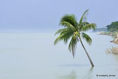 Calmness !!! (mustapha_ahmad) Tags: blue wallpaper sky tree green water river poster landscape nikon photographer horizon banner bangladesh padma 2011 d90 mustaphaahmad maowa bhagyakul