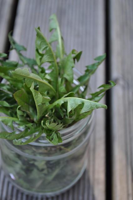 võilillelehed/dandelion leaves