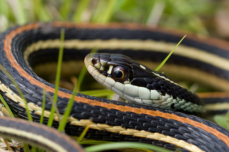 ... Herp Forum • View topic - Spring in the midwest, MO, OK, AR and KS