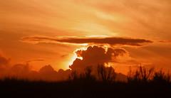 O sol que doura o horizonte (Luiz Casimiro Fotografia) Tags: sunset brasil prdosol poesia poema luizcasimiro osolquedouraohorizonte