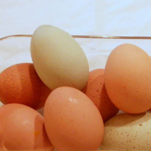 fresh eggs from our chickens
