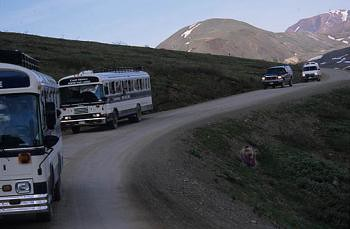 Denali shuttle busses