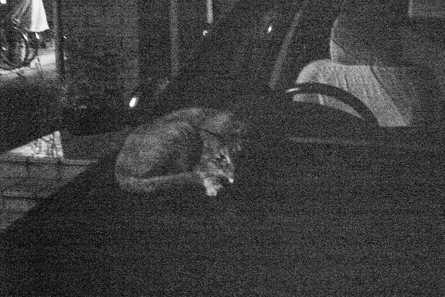 Today's Cat@2011-06-21