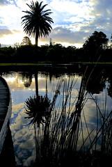 Botanic Gardens Reflections (Marian Pollock (Weiler) - Thanks for 500,000 views) Tags: sunset lake grass clouds superb australia melbourne victoria palm simply botanicgardens eurekatower