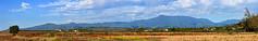 Lihue Mountain Panorama (Emily Miller Kauai) Tags: panorama mountains hawaii kauai fields lihue