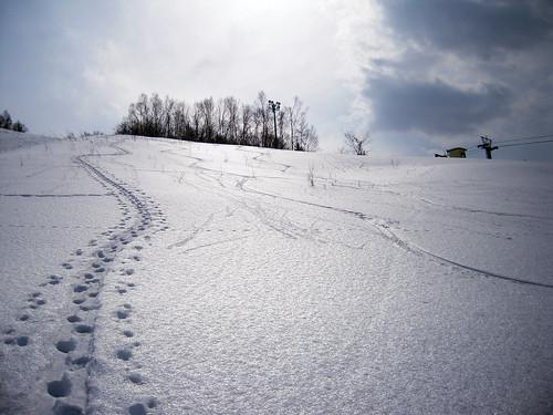 Snowcrust