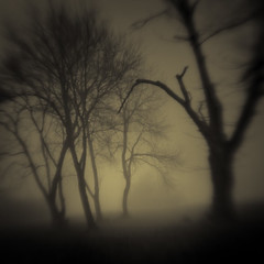 The New Beginning (isvibilsky) Tags: tree fog lensbaby visualpoetry selectivefocus