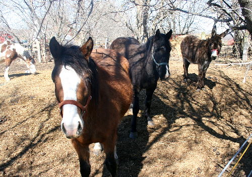 Horses along the rail trail