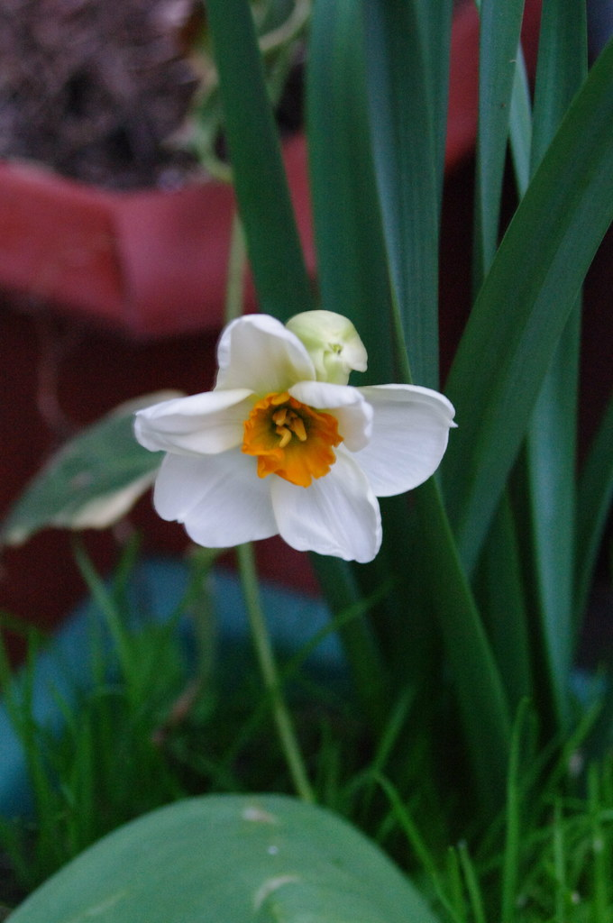 First flower of spring in my boxes