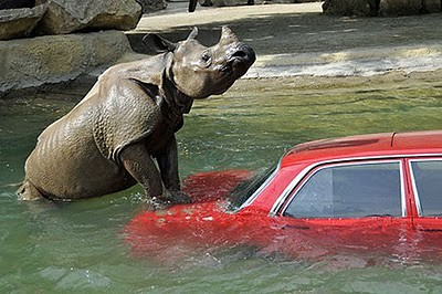 animals_attacking_cars_01