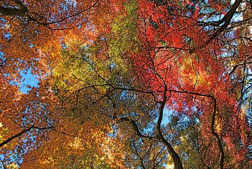Хрупкая красота Японии japan3