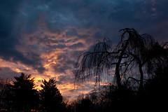 Dancing to the Dawn (John-Pa) Tags: sky dawn morninglight backyard canonef1635mmf28liiusm