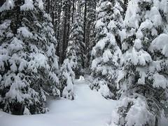 IMG_4798 (tertils) Tags: winter snow canada skiing zima xcountry xcountryskiing snieg