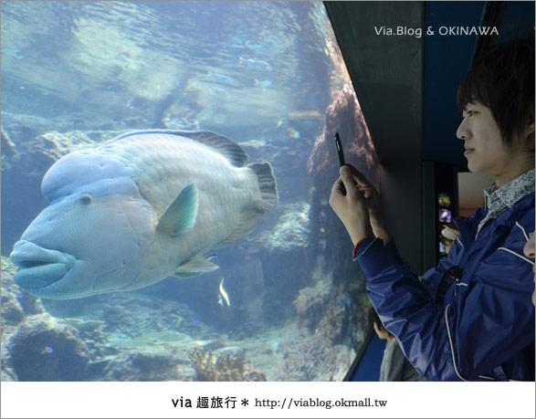 【沖繩景點】美麗海水族館~帶你欣賞美麗又浪漫的海底世界!13