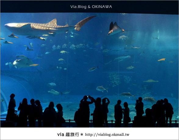 【沖繩景點】美麗海水族館~帶你欣賞美麗又浪漫的海底世界!24