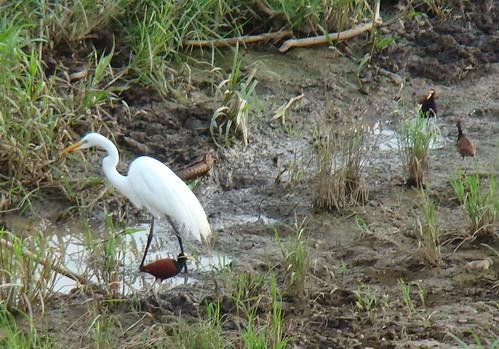 Aves de Costa Rica