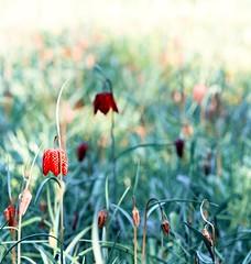 ~ unreal springtime ~ (Janey Kay) Tags: mars primavera square march spring squareformat cherryblossom bp bonheur printemps mrz frhling carr boulognebillancourt 2011 formatcarr jardinsalbertkahn janeykay nikond300s crisers