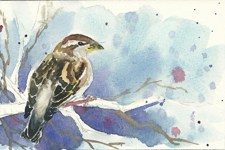 20110409_sparrow_step6