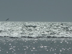 P1000011 (gzammarchi) Tags: stella italia mare natura animale paesaggio gabbiano ravenna riflesso monocrome camminata itinerario lidodidante