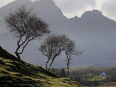 Skye (PeskyMesky) Tags: skye scotland isleofskye mygearandme mygearandmepremium mygearandmebronze mygearandmesilver mygearandmegold artistoftheyearlevel3 artistoftheyearlevel4 artistoftheyearlevel5