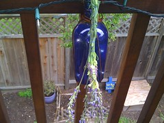 hanging lavander