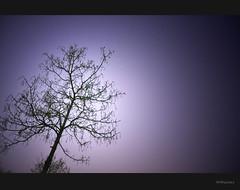 Unreality (Electricoomassie) Tags: light moon colour tree photoshop nikon purple magic colores luna rbol modification magia morado d90 modificacin nebulaes