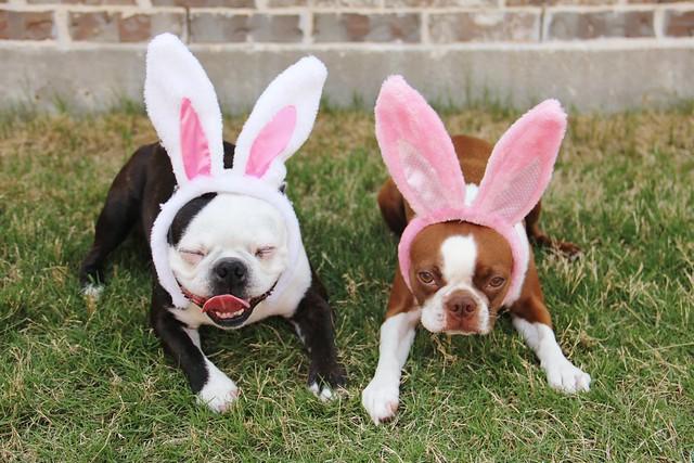 not so happy bunnies