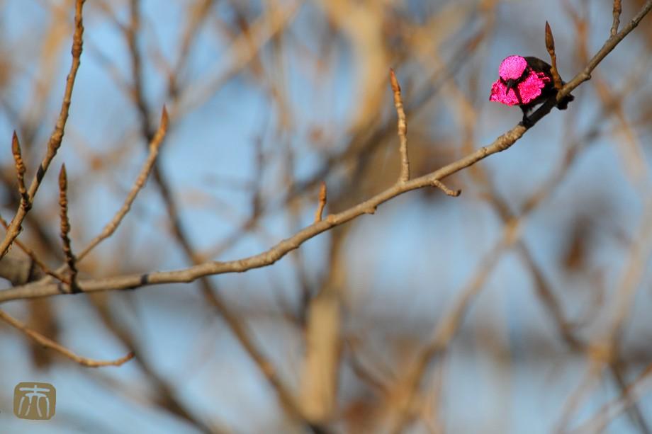 Anna's Hummingbird o0211-2